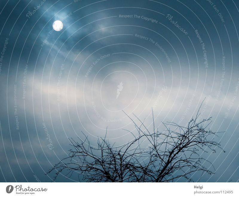 Sonne....ganz zaghaft.... Himmel weiß Baum blau schwarz Wolken dunkel Herbst grau Regen hell Beleuchtung Wetter dünn Ast