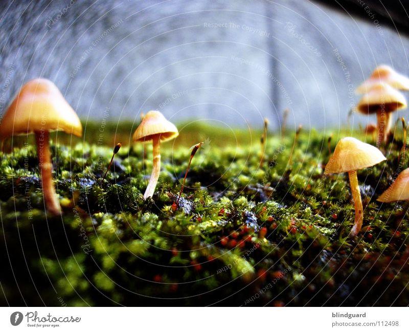 Return To The Mushroomplanet Natur grün Pflanze gelb Leben Herbst Wand Garten Mauer Park klein Umwelt Wachstum Blühend Weltall Sonnenschirm