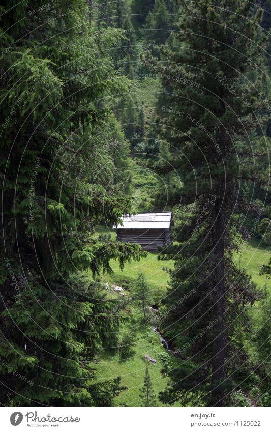 Lieblingsplatz Natur Ferien & Urlaub & Reisen Pflanze grün Sommer Landschaft Einsamkeit ruhig Wald Berge u. Gebirge Umwelt Gras wandern Idylle Lebensfreude Romantik