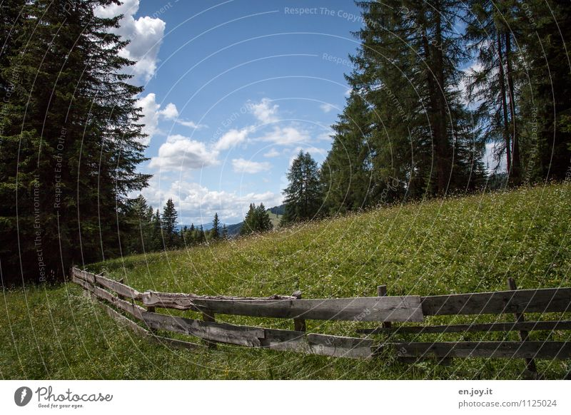 Abgrenzung Ferien & Urlaub & Reisen Sommer Natur Landschaft Pflanze Himmel Frühling Schönes Wetter Gras Blumenwiese Nadelbaum Tanne Fichte Wiese Wald Hügel grün