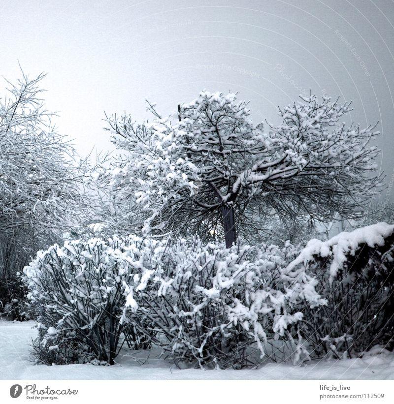 ich_will_sommer_SOFORT_!!! weiß Baum Winter kalt Schnee Eis Frost frieren Winterstimmung