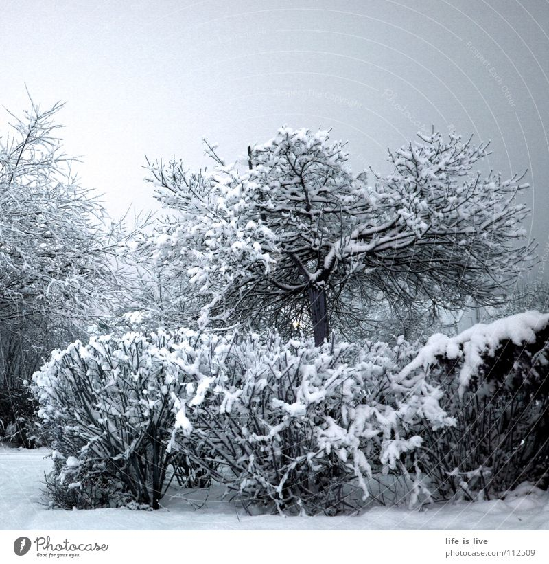 ich_will_sommer_SOFORT_!!! Winter kalt Baum weiß Schnee frieren Eis Frost Winterstimmung