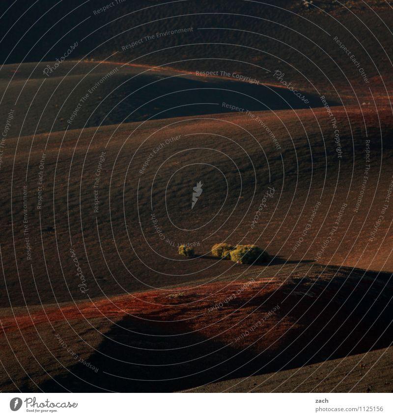 Feuerberge schön Ferien & Urlaub & Reisen Ferne Insel Berge u. Gebirge Landschaft Sand Sträucher Hügel Vulkan dunkel braun rot Reisefotografie