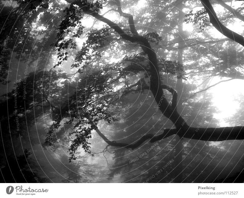 Nebel_01 Baum Einsamkeit Wald kalt Herbst grau feucht trüb herbstlich