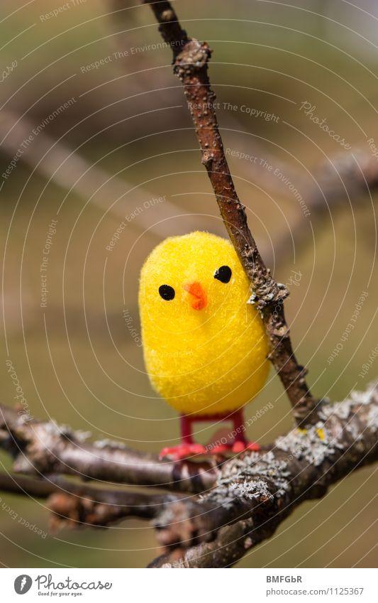 Fliegen lernen Freude gelb lustig Spielen klein Freiheit fliegen frisch frei sitzen Fröhlichkeit warten beobachten niedlich Abenteuer Schutz