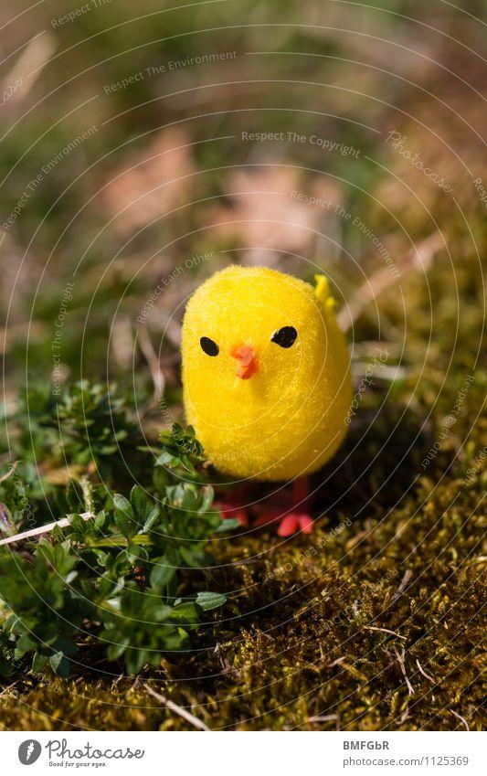 my yellow lucky bird Natur Erde Pflanze Gras Moos Farn Grünpflanze Garten Park Wiese Vogel Kitsch Krimskrams Spielzeug Spaßvogel Erholung hocken Blick sitzen