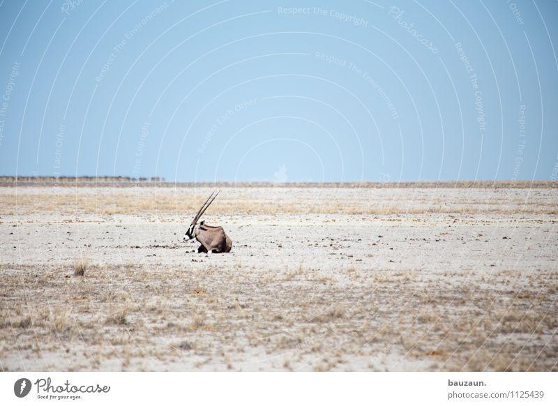 statt nur dabei. Natur Ferien & Urlaub & Reisen schön Einsamkeit Landschaft Tier Ferne Wärme Freiheit Horizont liegen Tourismus Wildtier Ausflug beobachten