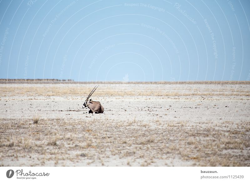 statt nur dabei. Natur Ferien & Urlaub & Reisen schön Einsamkeit Landschaft Tier Ferne Wärme Freiheit Horizont liegen Tourismus Wildtier Ausflug beobachten Schönes Wetter