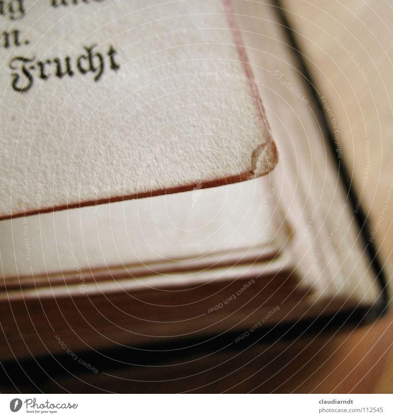 Trockenobst alt Buch Frucht Papier lesen Ecke Schriftzeichen kaputt Vergangenheit Seite Gebet Sammlung Tradition Märchen Druck singen