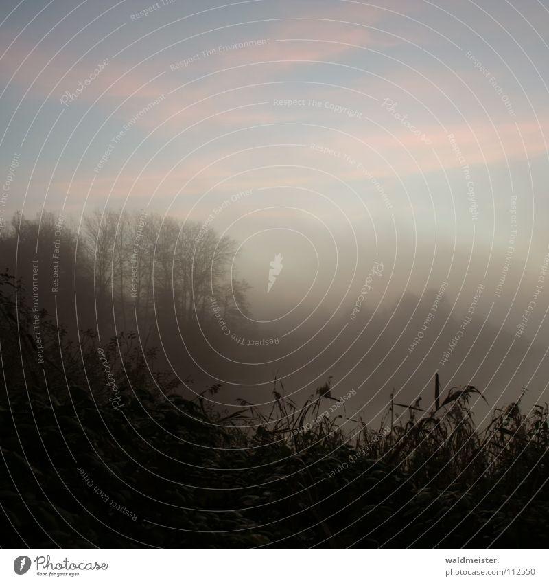 Morgenstimmung Baum Wolken Wald kalt Herbst Traurigkeit Nebel Romantik Schilfrohr Morgennebel