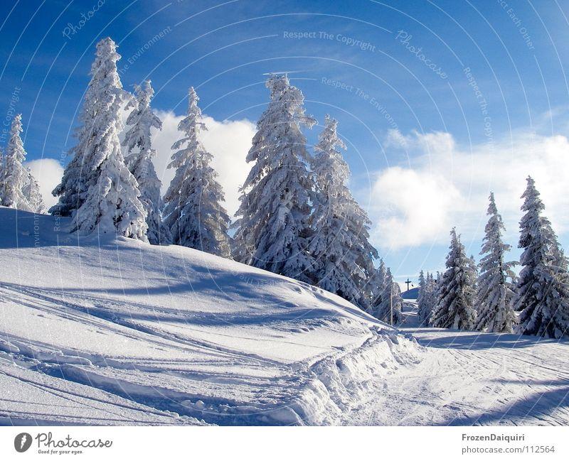 the first snow II Baum Gefühle Fichte Fröhlichkeit Berghang Hügel Licht Nadelbaum ruhig Schneedecke Skispur Tiefschnee Bundesland Tirol Umwelt weiß Winter