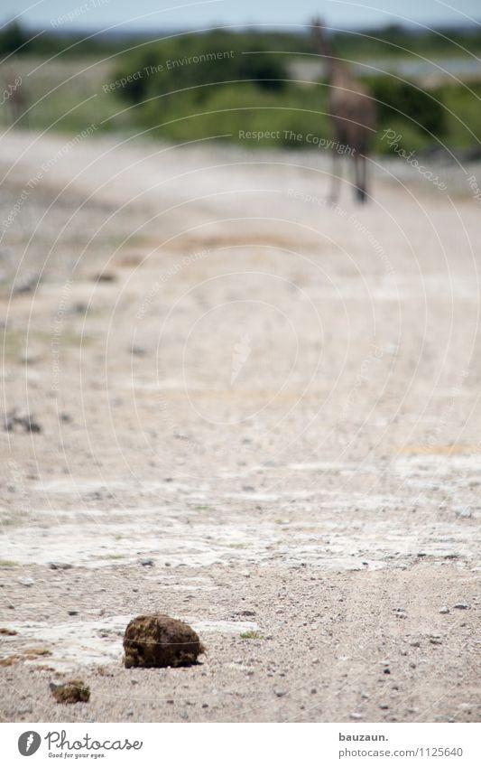 shit happens. Natur Ferien & Urlaub & Reisen Landschaft Tier Ferne Umwelt Wärme Straße natürlich Wege & Pfade Freiheit dreckig Tourismus Wildtier Sträucher