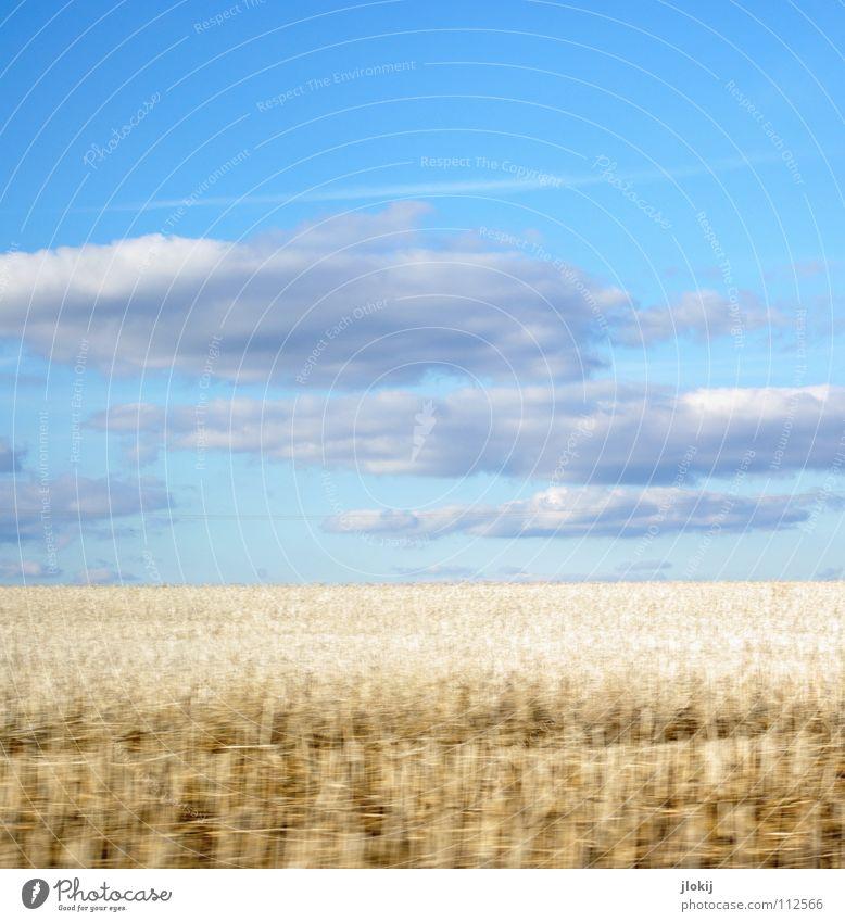 Weißes Feld Weizen Stoppelfeld weiß Wolken Himmel fahren Geschwindigkeit Momentaufnahme Kondensstreifen Herbst Getreide Rogge blau clouds sky field white blue