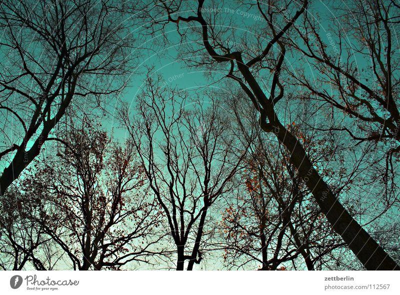Kreuzberg am Morgen Wald Park Victoriapark Baum Herbst Froschperspektive Himmel viktoriapark Baumstamm ast. äste Zweig Schönes Wetter