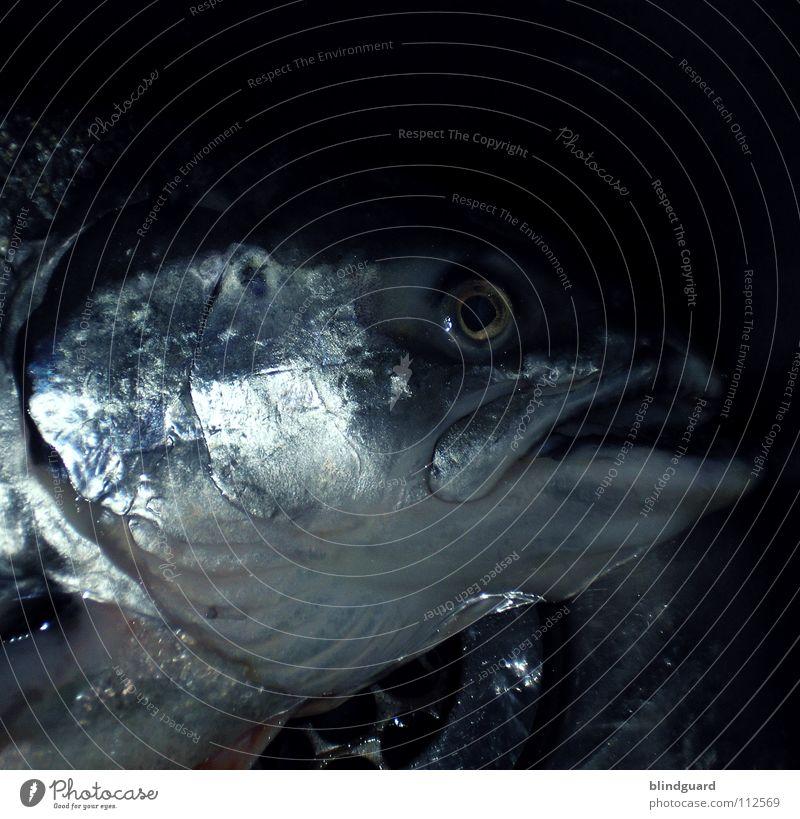 Freitags Gibt's Fisch Wasser Auge Tod Religion & Glaube glänzend groß nass frisch Ernährung Symbole & Metaphern Kochen & Garen & Backen Küche Bar Gastronomie