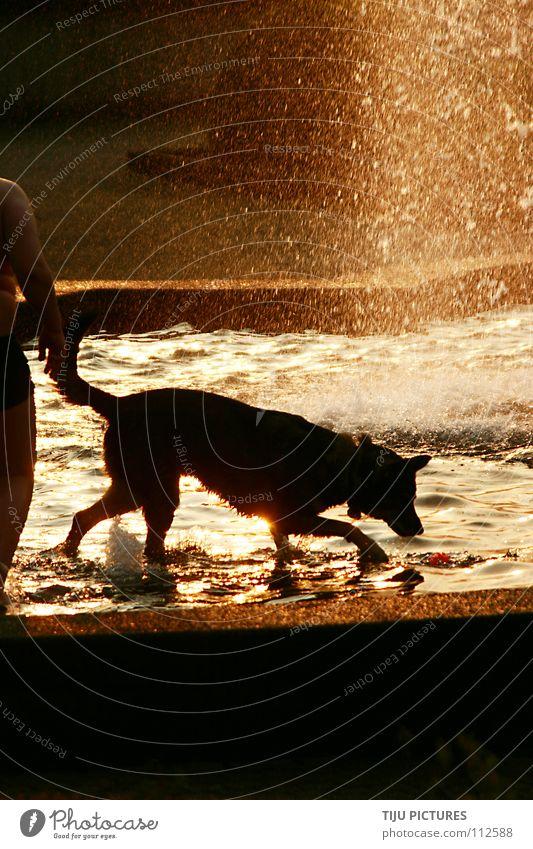 Hunde Sommer Bad Wasser Sonne Freude Wärme nass frisch Physik Schwimmen & Baden Brunnen Säugetier Durst Badehose Kühlung
