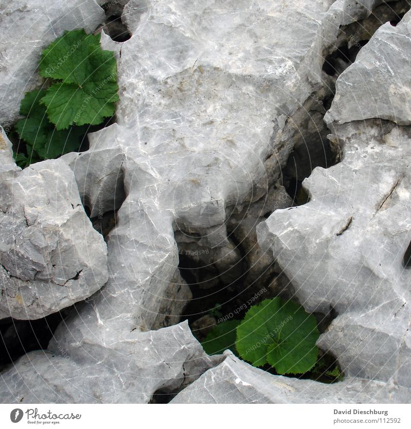 Felsenspaltung Natur weiß grün Pflanze Sommer Blatt schwarz gelb Farbe Frühling grau Stein Feste & Feiern groß Erde
