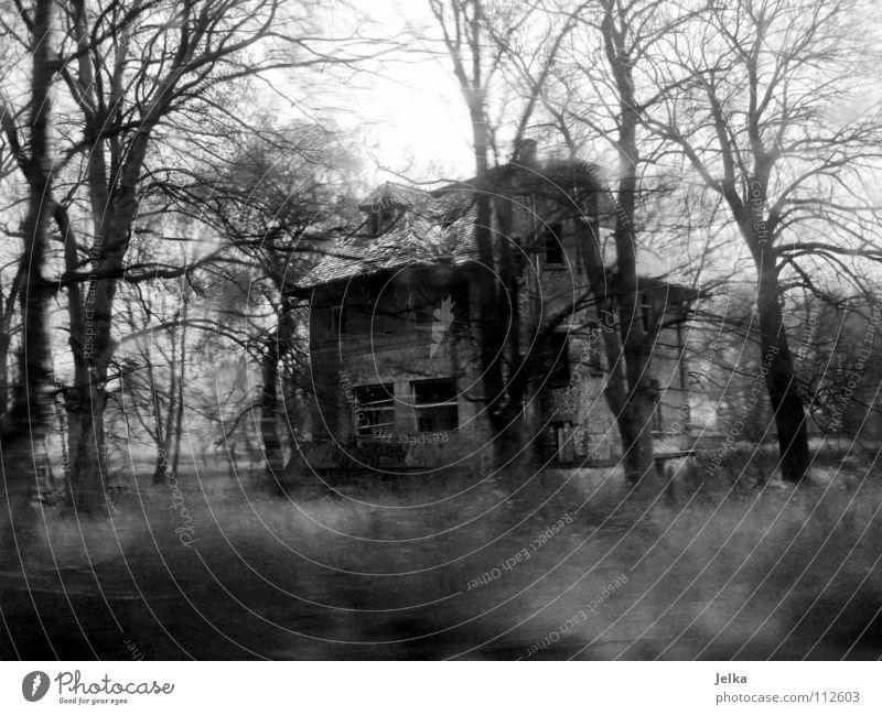 abgewrackt Baum Winter Einsamkeit Haus Wald dunkel kalt Architektur Gebäude Regen Nebel verfallen gruselig Verfall schäbig