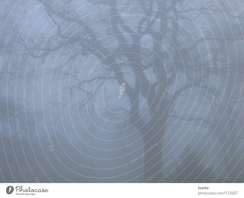 Nebel im Winter Baum November mystisch eigenwillig Herbst grau Wolken Eiche unheimlich Wald Schemenhaftigkeit blau Macht