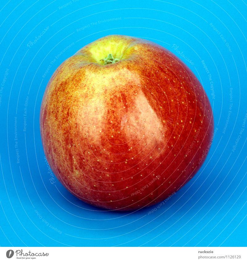 Royal Gala; Apfel; Natur blau Pflanze Baum rot Hintergrundbild Garten Frucht frei Apfel Stillleben Schlag Heilpflanzen Objektfotografie Laubbaum neutral