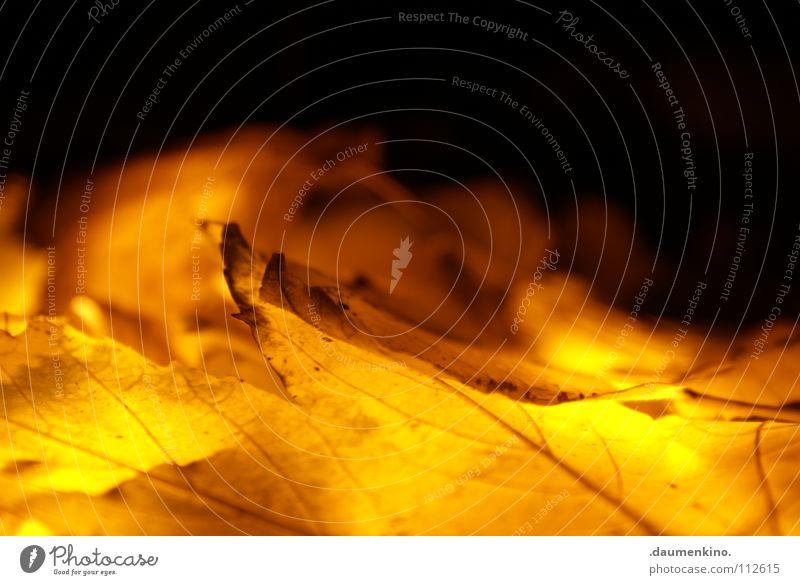23 Baum Farbe Blatt gelb Tod kalt Herbst Lampe Beleuchtung braun Wind fliegen Ordnung Bodenbelag Vergänglichkeit fallen