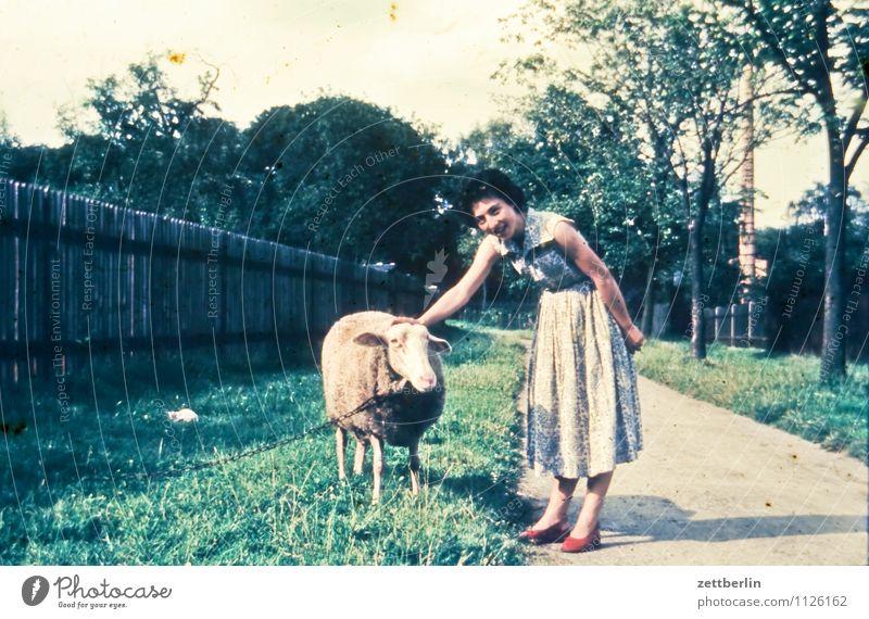 Ein Schaf, ein Mensch, 1959 Frau Jugendliche Junge Frau Ferien & Urlaub & Reisen Reisefotografie Landschaft früher Vergangenheit Porträt Tierporträt Farbe