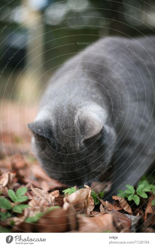 schnüffeln Katze Natur Blatt Tier Wald Herbst Frühling Garten Park Freizeit & Hobby Neugier Suche entdecken Haustier Geruch Hauskatze