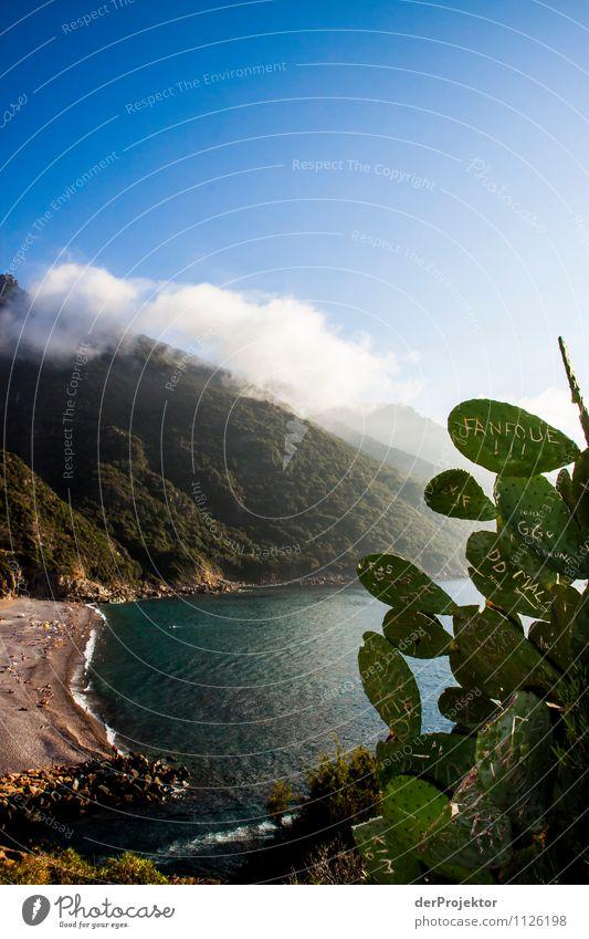 Kaktusgraffiti mit Aussicht Ferien & Urlaub & Reisen Tourismus Ausflug Freiheit Berge u. Gebirge wandern Umwelt Natur Landschaft Pflanze Sommer Schönes Wetter
