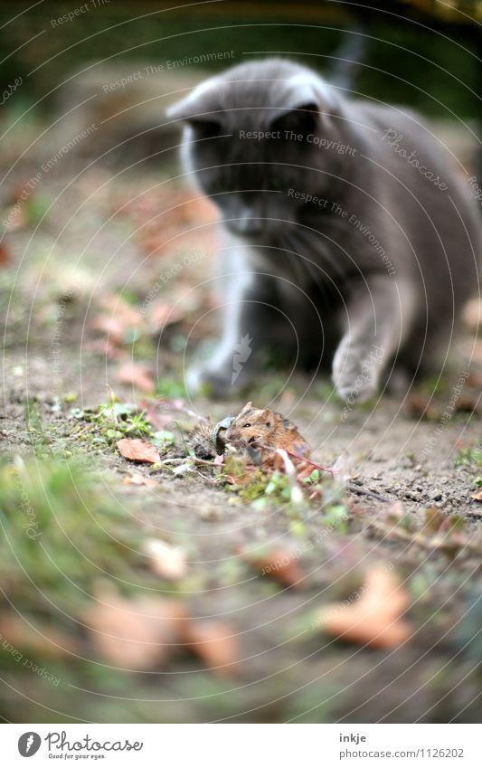 erlegen Katze Natur Tier Wald Gefühle Herbst Frühling Tod klein Garten Stimmung Park Angst Wildtier Erfolg Macht
