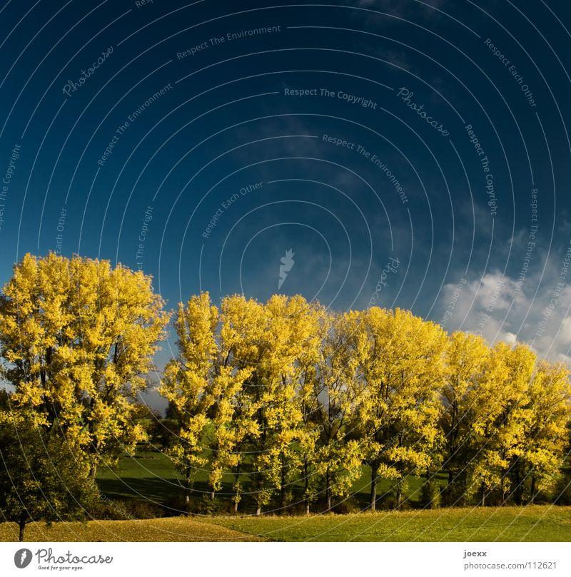 Reihe Baum wolle Baumreihe Erholung Herbstfärbung Herbstlaub Idylle Laubbaum Denken ruhig Sonnenenergie Sonnenlicht Stimmung Physik Wolken Himmel blau