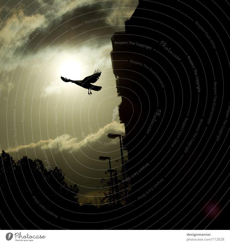 Ravens Return Rabenvögel Gegenlicht schwarz Wolken dunkel Endzeitstimmung Ikarus Himmel Stadt Vogel Laterne Horizont blenden Schweben Beginn gleiten kalt rein