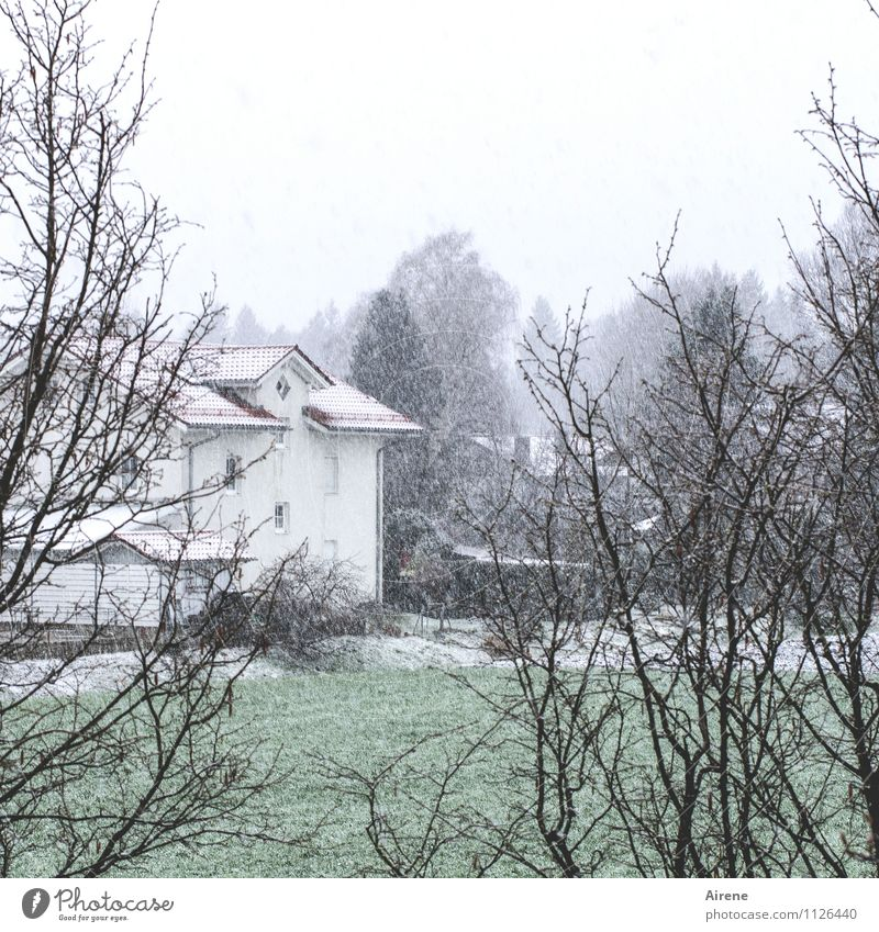 Schnee, der auf Wiesen fällt Haus Garten Wolken Winter schlechtes Wetter Schneefall Gras Sträucher Dorf Stadtrand Einfamilienhaus Wohnsiedlung kalt trist grün