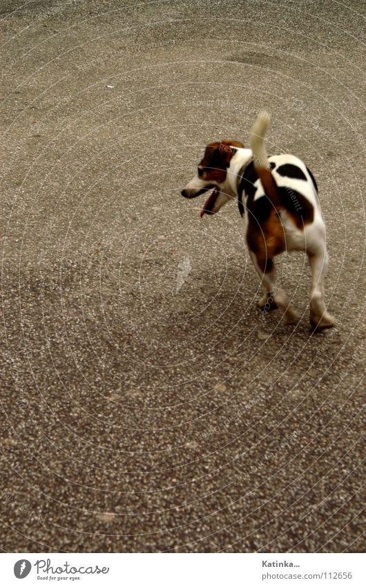 Auf der Jagd Einsamkeit Tier Farbe Straße Spielen Hund Platz Suche Asphalt Appetit & Hunger Fleck verloren Dom