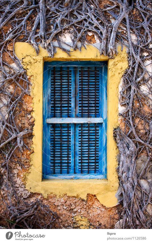 Zanzibar Gefängnisinsel Klettern Bergsteigen Natur Baum Linie alt historisch blau braun gelb schwarz weiß Sansibar Fenster zugeklappt Wand Gitter Holz Baustein