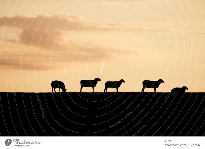 ___hmm_o_o__o_oh Fleisch Ernährung Bioprodukte Pfanne Ferien & Urlaub & Reisen Ferne Freiheit Himmel Sonnenaufgang Sonnenuntergang Wege & Pfade Tier Nutztier