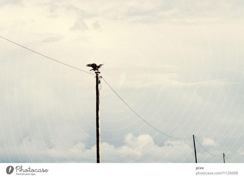 200   Punktlandung Ferien & Urlaub & Reisen Sommer Einsamkeit ruhig Wolken Tier dunkel Bewegung Stil Glück grau Freiheit fliegen Vogel Wildtier Flügel