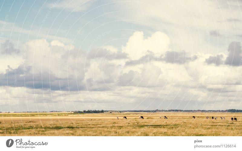 flachlandig Natur Ferien & Urlaub & Reisen blau Pflanze Landschaft Wolken Tier Ferne Freiheit Horizont Wetter Tourismus stehen Ausflug Pause Landwirtschaft