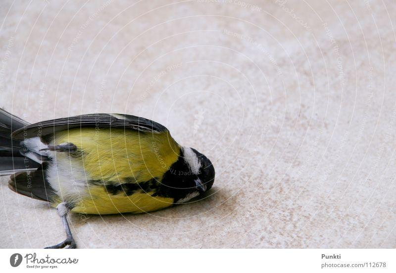 Tod eines Fliegers II Vogel klein Ende Feder Vergänglichkeit Meisen