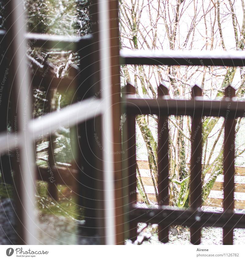 Schnee von gestern schlechtes Wetter Schneefall Pflanze Sträucher Balkon Fenster Balkontür Balkongeländer Sprossenfenster Holz Glas kalt braun weiß lüften offen