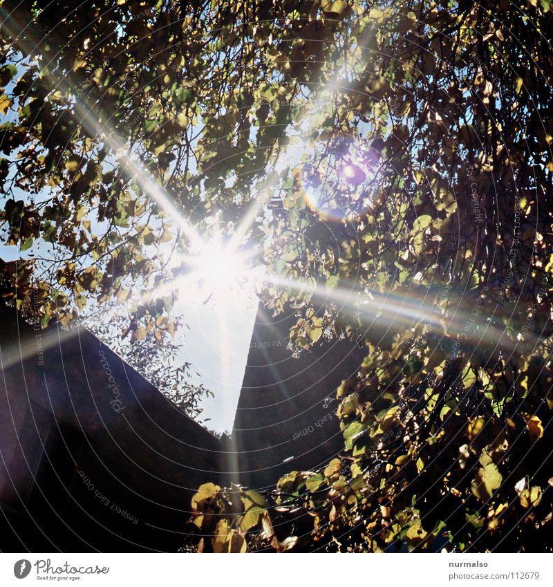 Guter Morgen X Natur Baum Sonne Freude Blatt Herbst Beleuchtung Stern Seil frisch Stern (Symbol) neu Ecke Tee Ei