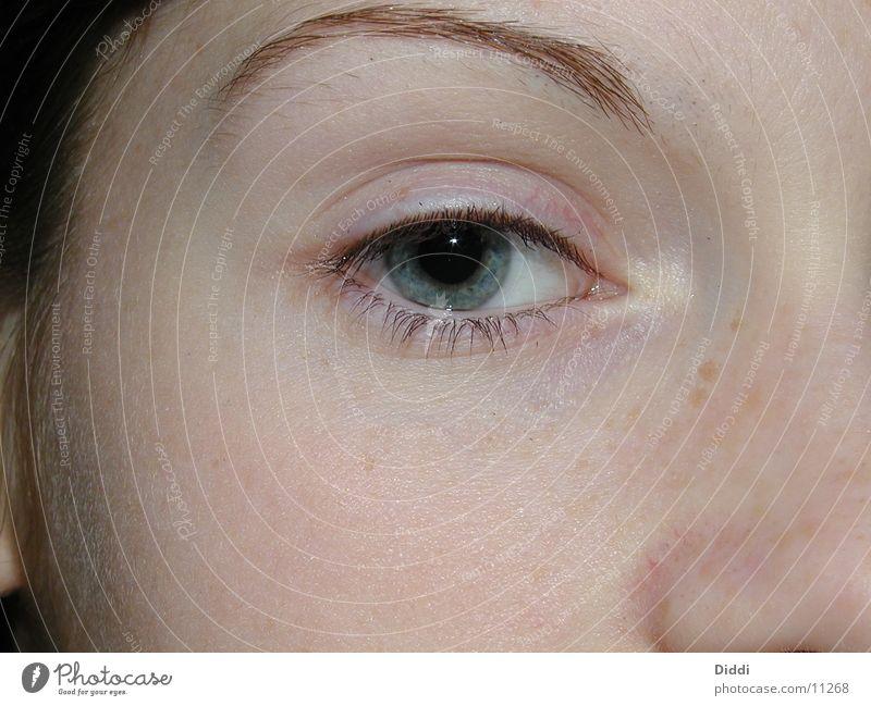 KL Inside Mensch Auge Kontaktlinse