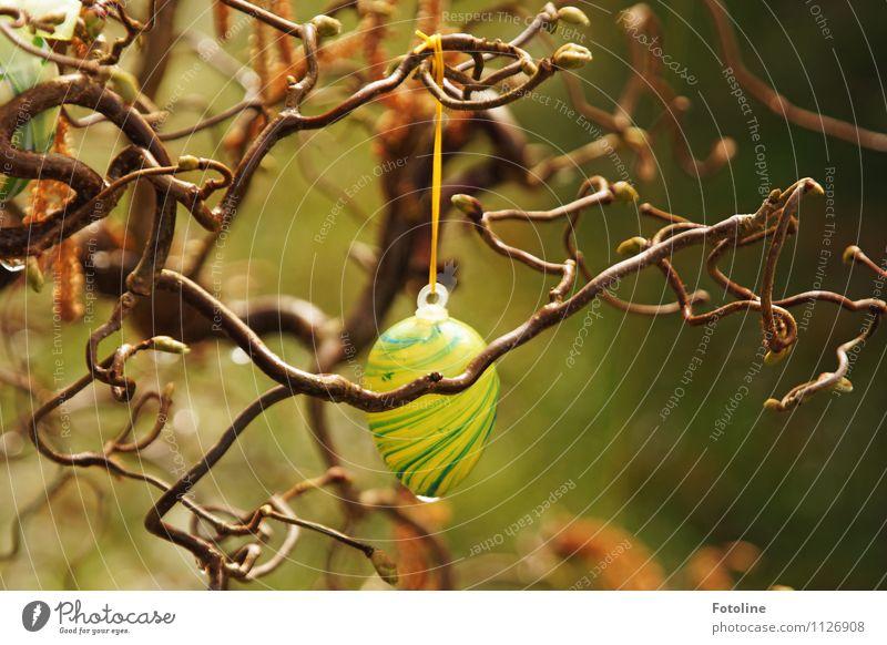 verregnete Ostern Umwelt Natur Pflanze Urelemente Wasser Wassertropfen Frühling Regen Baum Garten hell nah nass natürlich braun gelb grün Osten Osterei Farbfoto