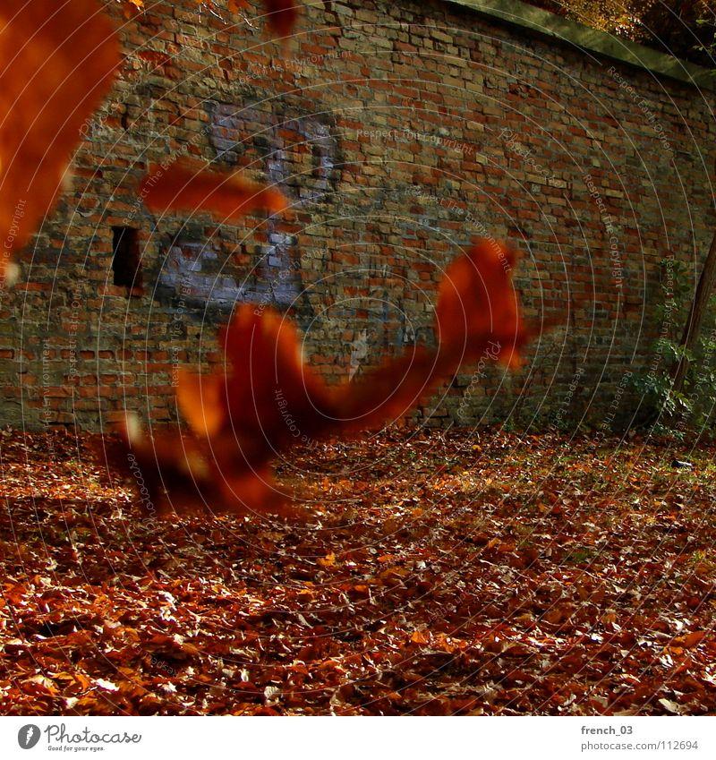 Herbstende Blatt Mauer rot gelb Schriftzeichen Wand Backstein fliegend Denken kalt Orientierung Schweben Wind Herbstfärbung Deutschland leaf leaves Luftverkehr