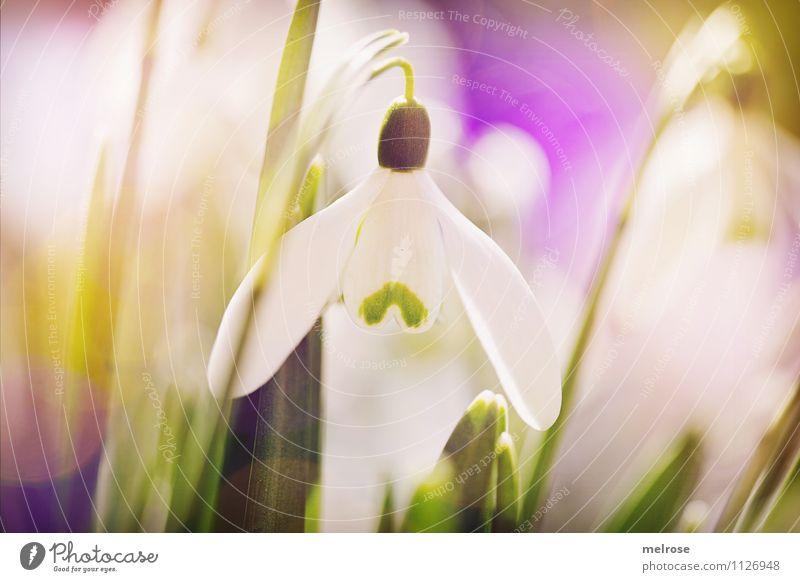 mittig Natur Pflanze schön grün weiß Erholung Blume Blatt ruhig gelb Frühling Blüte Gras Stil Garten Stimmung