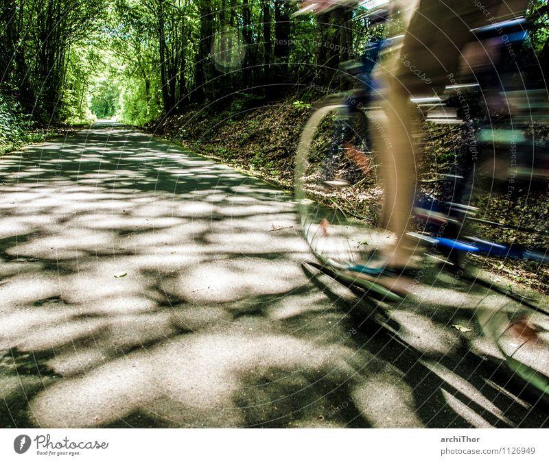 Rückenwind Sport Fahrradfahren Fahrradtour Ausflug Sommer Fitness Sport-Training Mensch Beine Fuß 1 Natur Baum Wald Diät Bewegung natürlich Geschwindigkeit blau