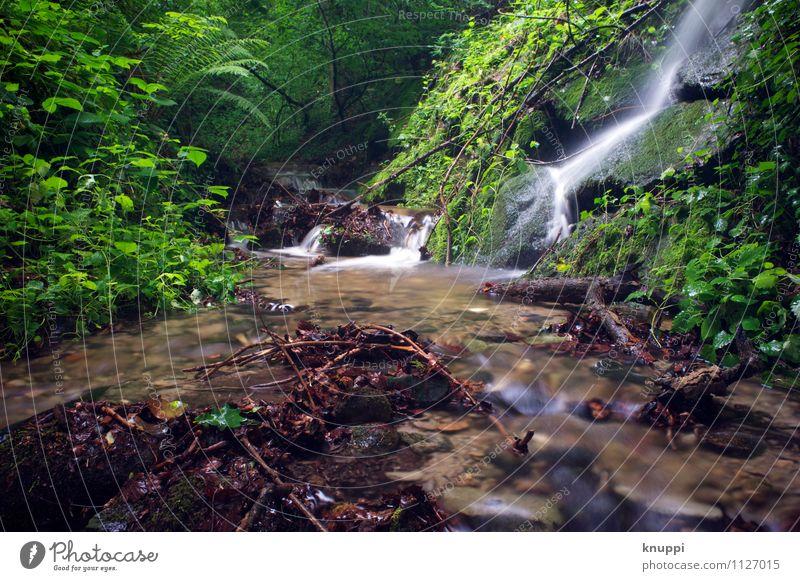 green Umwelt Natur Landschaft Pflanze Urelemente Erde Wasser Sonnenlicht Frühling Sommer Klima Klimawandel Schönes Wetter Sträucher Moos Grünpflanze Wildpflanze