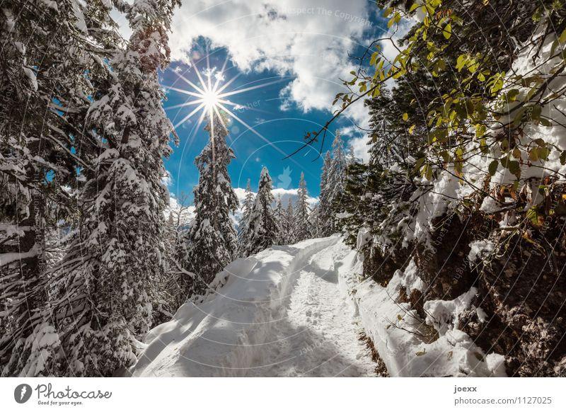 Geht los Ausflug Winter Schnee Berge u. Gebirge wandern Landschaft Himmel Wolken Sonne Sonnenlicht Wetter Schönes Wetter Wald Wege & Pfade hell schön Idylle