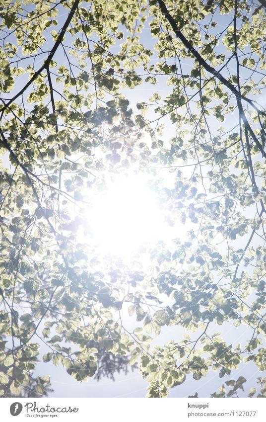Herbst Natur Pflanze weiß - ein lizenzfreies Stock Foto von Photocase
