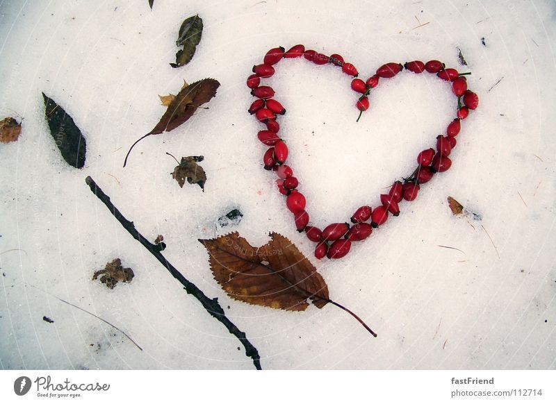 Liebe hat 4 Jahreszeiten rot Winter Blatt Liebe kalt Schnee Herbst Rose Herz fallen Ast Sehnsucht Wildtier gefroren Jahreszeiten Stock