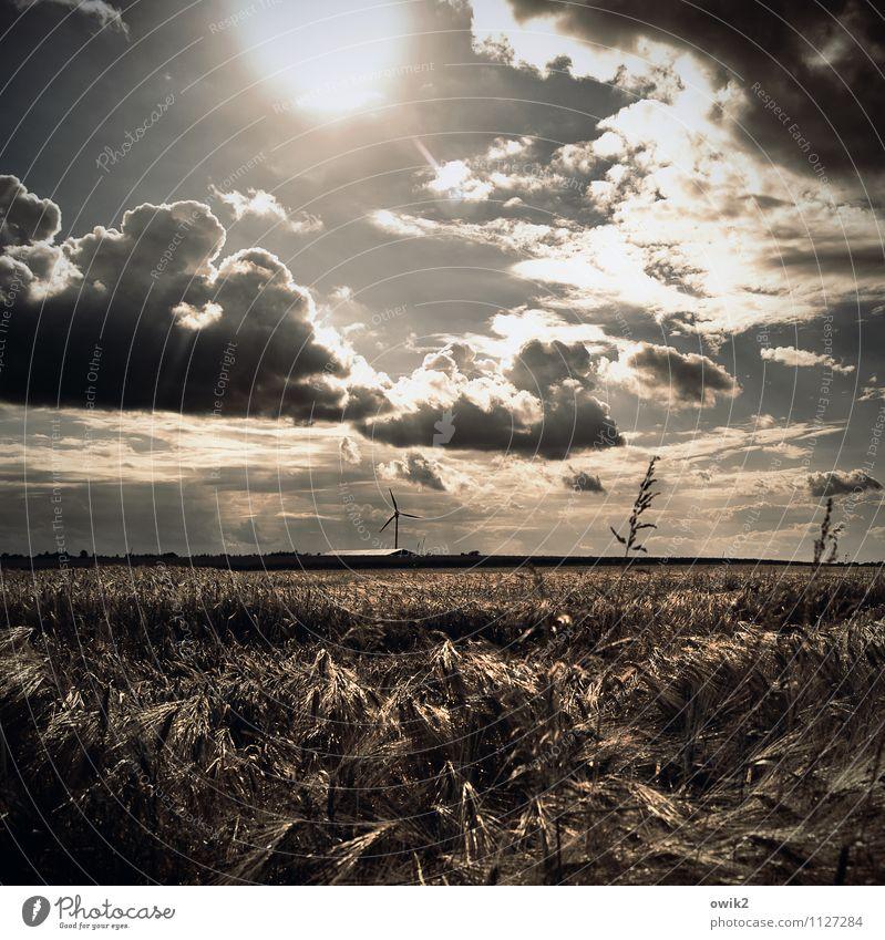 Einzelkämpfer Umwelt Natur Landschaft Pflanze Urelemente Luft Himmel Wolken Horizont Wetter Schönes Wetter Wind Sträucher Getreide Windkraftanlage Kornfeld